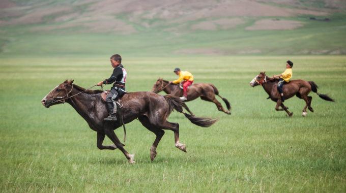 Cavall2
